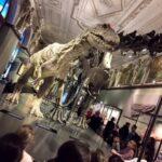 Dinosaurier-1