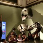 Dinosaurier-13